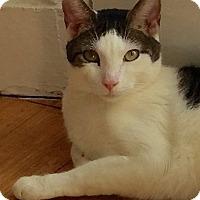 Adopt A Pet :: Jasper - Brooklyn, NY