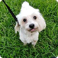 Adopt A Pet :: Missy - Fort Lauderdale, FL