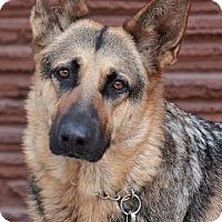Adopt A Pet :: Lucy von Lollar - Los Angeles, CA