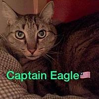 Adopt A Pet :: Captain Eagle - Fort Lauderdale, FL