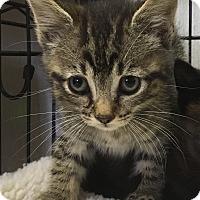 Adopt A Pet :: Moon - Savannah, GA