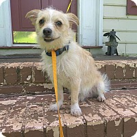 Adopt A Pet :: Toby - West Springfield, MA