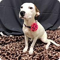 Adopt A Pet :: Marcy - Baton Rouge, LA