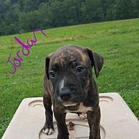 Adopt A Pet :: Jordan - Burlington, VT
