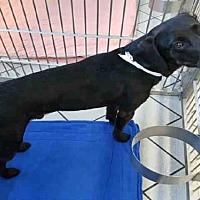 Adopt A Pet :: HANK - Canfield, OH