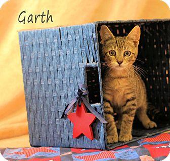 Domestic Shorthair Kitten for adoption in Chester, Maryland - Garth Brooks