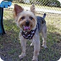 Adopt A Pet :: Spike - Spring Hill, FL