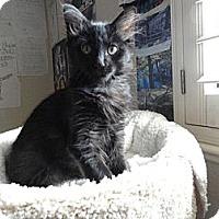 Adopt A Pet :: Newton - Phoenix, AZ