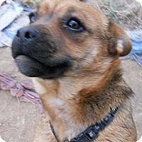 Adopt A Pet :: Sparkle - dewey, AZ