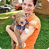 Adopt A Pet :: Aubrey - Reisterstown, MD
