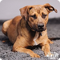 Adopt A Pet :: Willow - Portland, OR
