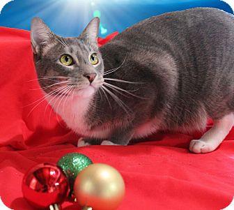 Domestic Shorthair Cat for adoption in McDonough, Georgia - Maxie