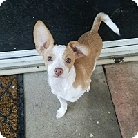 Adopt A Pet :: Astro - Lodi, CA