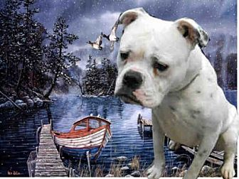 Boxer/American Bulldog Mix Dog for adoption in Fairfield, California - LUCY