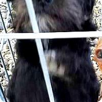 Adopt A Pet :: Cole-ADOPTION PENDING - Boulder, CO