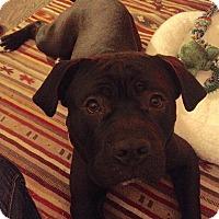 Adopt A Pet :: Lumpy - Villa Park, IL