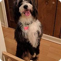 Adopt A Pet :: Cinderella - Athens, GA
