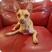 Adopt A Pet :: Gribbles - Deerfield Beach, FL