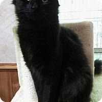 Adopt A Pet :: Shadow - Witter, AR