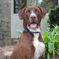 Adopt A Pet :: Zeus - Brunswick, GA