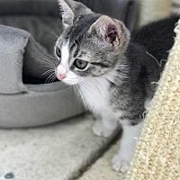 Adopt A Pet :: Gertie - Island Park, NY