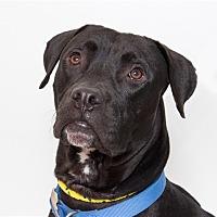 Adopt A Pet :: Hernan - San Luis Obispo, CA