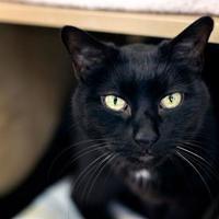 Adopt A Pet :: Oahu - Palm Springs, CA