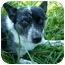 Photo 1 - Australian Cattle Dog Mix Dog for adoption in Waynetown, Indiana - Jack