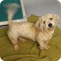 Adopt A Pet :: Morgan - South Jersey, NJ