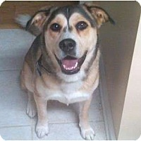 Adopt A Pet :: Lucy - Duluth, GA