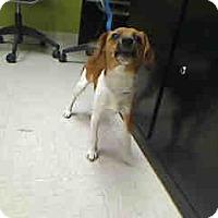 Adopt A Pet :: Spirit - Antioch, IL