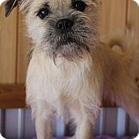 Adopt A Pet :: Gable - Wytheville, VA