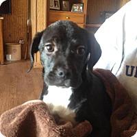 Adopt A Pet :: Julie - Carey, OH