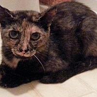 Adopt A Pet :: Garnet - Greer, SC