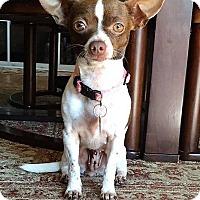 Adopt A Pet :: Xena - AUSTIN, TX