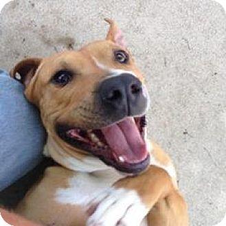 Terrier (Unknown Type, Medium) Mix Dog for adoption in South Haven, Michigan - Cherub