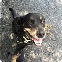 Adopt A Pet :: Mandy - Jupiter, FL