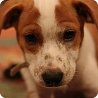 Adopt A Pet :: Simone - Fredericksburg, VA