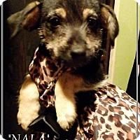 Adopt A Pet :: Nala - El Cajon, CA