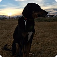 Adopt A Pet :: Obie - Greeley, CO