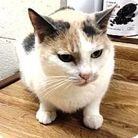 Adopt A Pet :: Somara - Woodbury, NJ