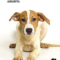 Adopt A Pet :: Joplin - Baton Rouge, LA