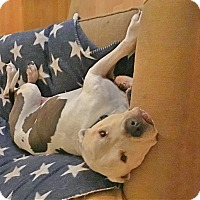 Adopt A Pet :: Charlie - San Juan Capistrano, CA
