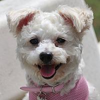 Adopt A Pet :: Darcy - La Costa, CA