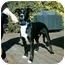 Photo 1 - Border Collie/Labrador Retriever Mix Dog for adoption in Tracy, California - Sparkie