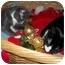 Photo 3 - Domestic Shorthair Kitten for adoption in Little Neck, New York - home 4 xmas