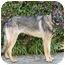 Photo 4 - German Shepherd Dog Dog for adoption in Los Angeles, California - Stella von Skye