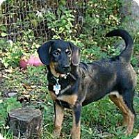 Adopt A Pet :: Ryder - PENDING, in ME - kennebunkport, ME
