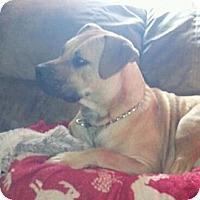 Adopt A Pet :: Jack - Claypool, IN