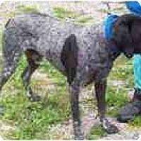 Adopt A Pet :: FOUND IN ALLIANCE - Alliance, OH